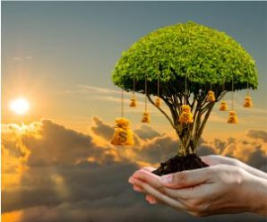 Push to tree transplantation work expedites Dwarka Eway completion